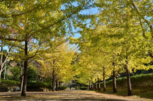 2019-11-12南郷公園4
