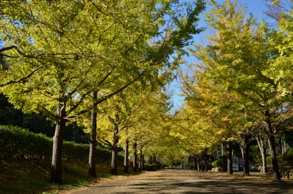 2019-11-12南郷公園8