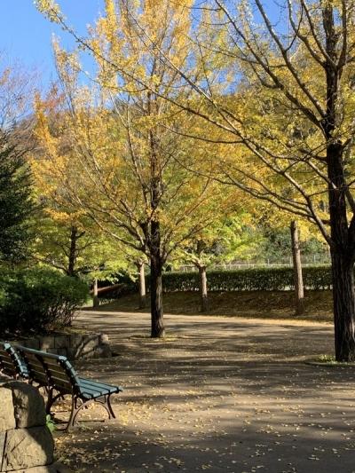 2019-11-12南郷公園10