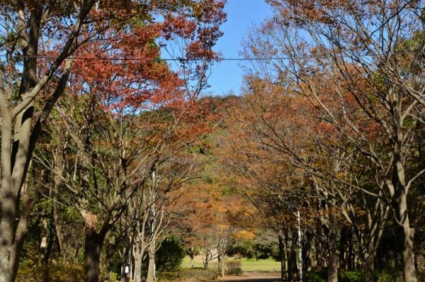 201-11-12南郷公園5