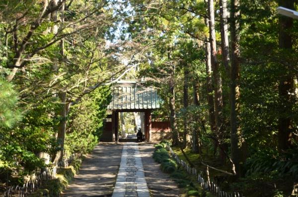 寿福寺2020 3