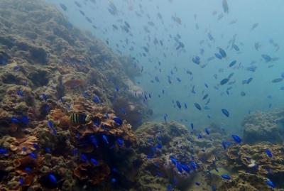 体験ダイビング海底少年_191018_0060