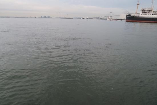横浜港 トビウオ?
