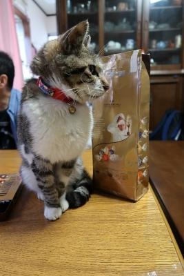 猫とお菓子