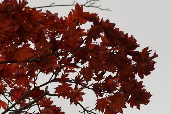 山中湖 紅葉