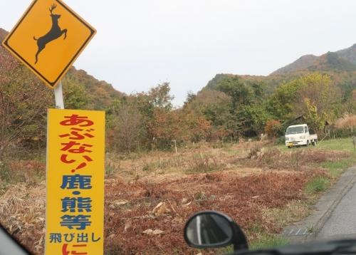 会津西街道 日光市 鹿熊飛び出し注意