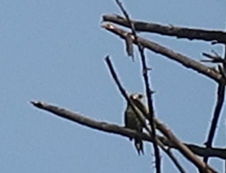 鶴ヶ城 鳥