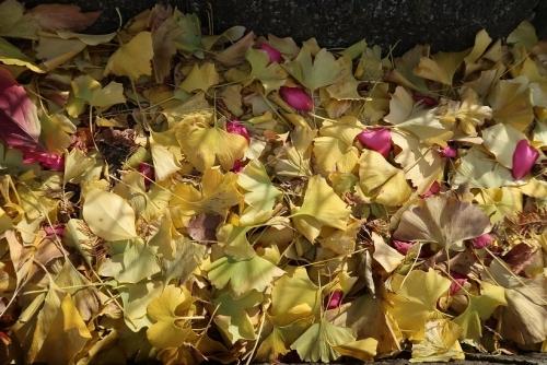 葉っぱと花びら