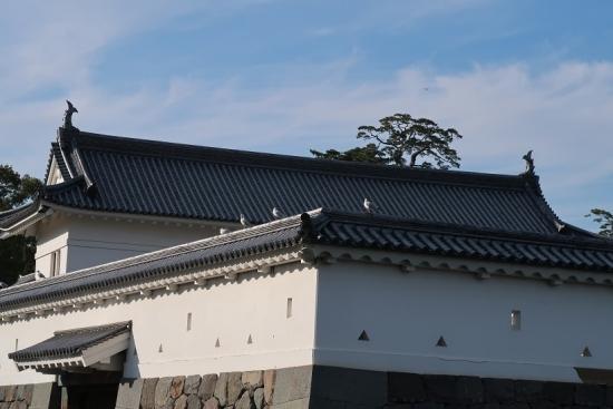 小田原城 銅門(あかがねもん) ユリカモメ