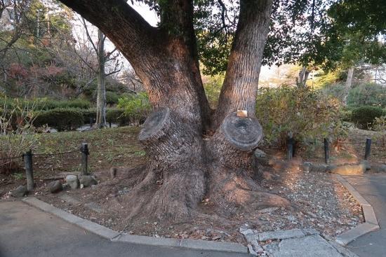 小田原城 地震で滑り落ちた石垣