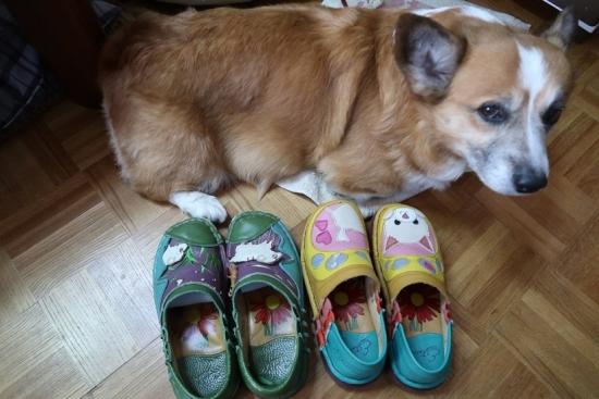 ワンコの靴ヒツジの靴