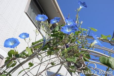 s-IMG_4646.jpg