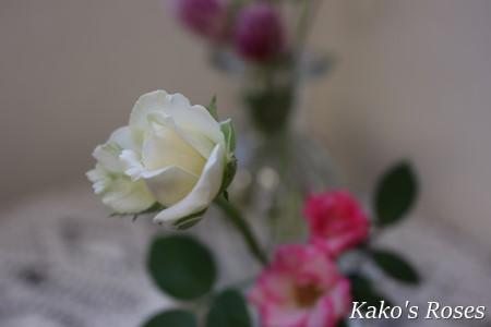 s-IMG_4693.jpg