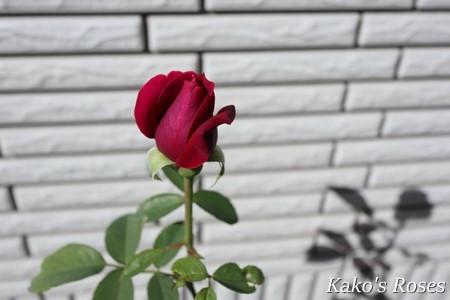 s-IMG_5056.jpg
