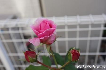 s-IMG_5139.jpg