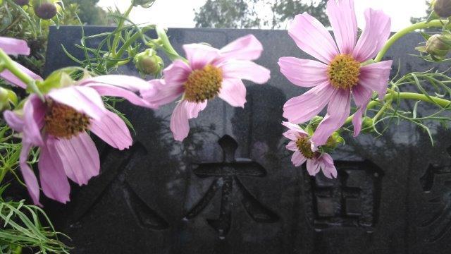 墓参り2019 (1)