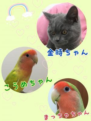image1_(185)_convert_20200122164103.jpeg