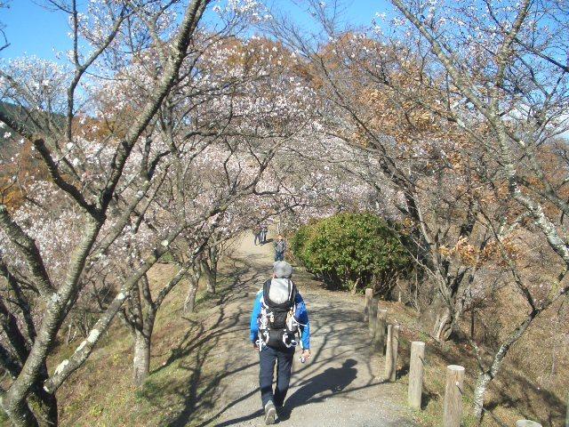桜並木を戻る