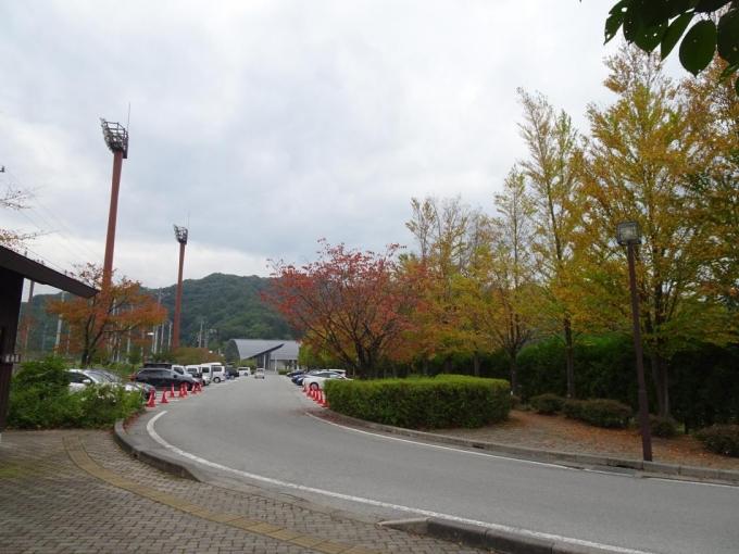 色付く街路樹
