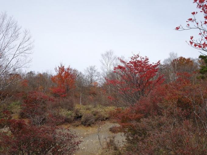 小沼湖畔の紅葉1