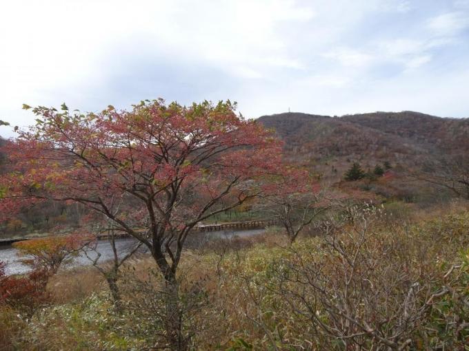 マユミと地蔵岳