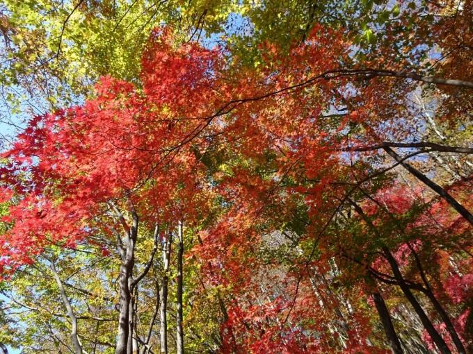 キラキラの紅葉