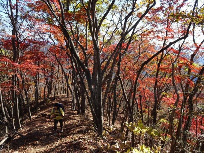 紅葉の下を山頂へ