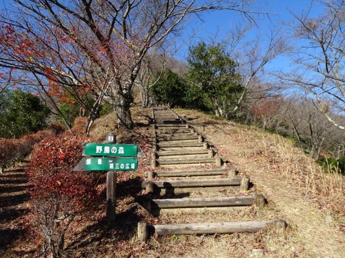 桜山への階段