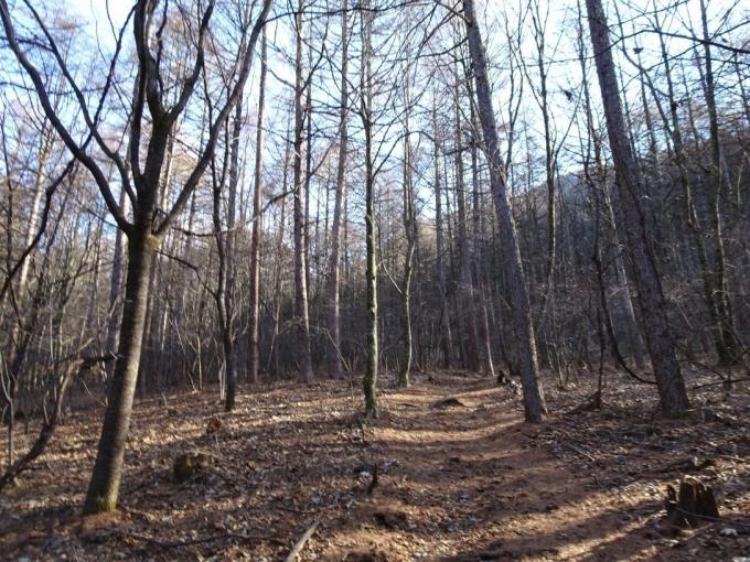 冬枯れの登山道(霜柱を踏んで)