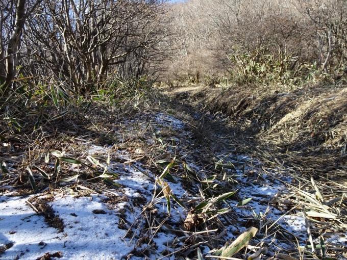 残る雪と笹葉を敷き詰めた登山道