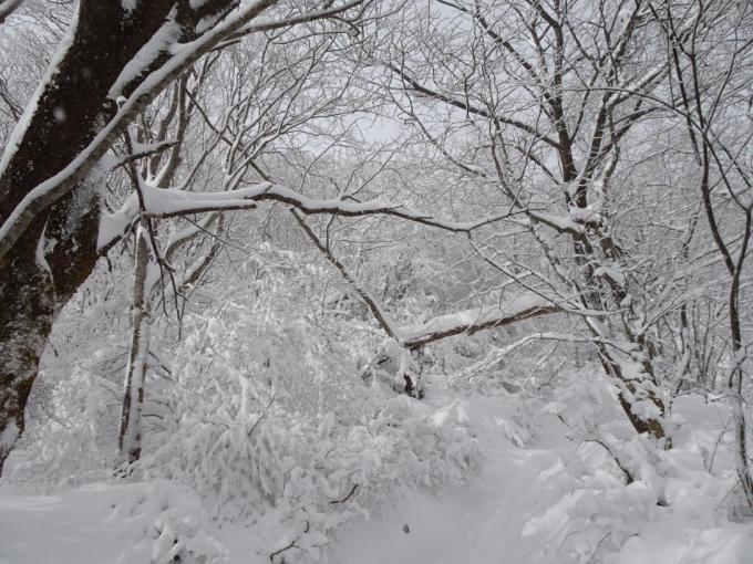 モッサモサの雪