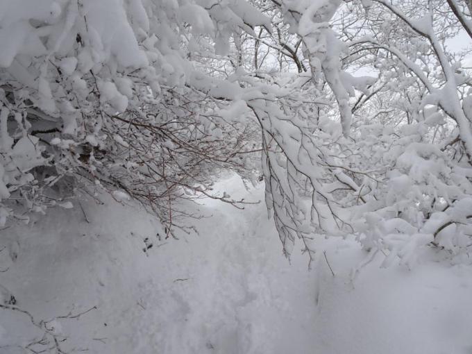 霧氷のトンネル1
