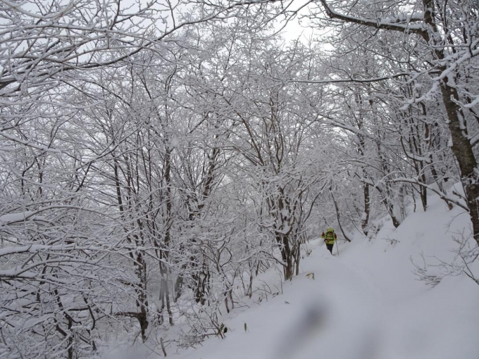 霧氷のトンネル2