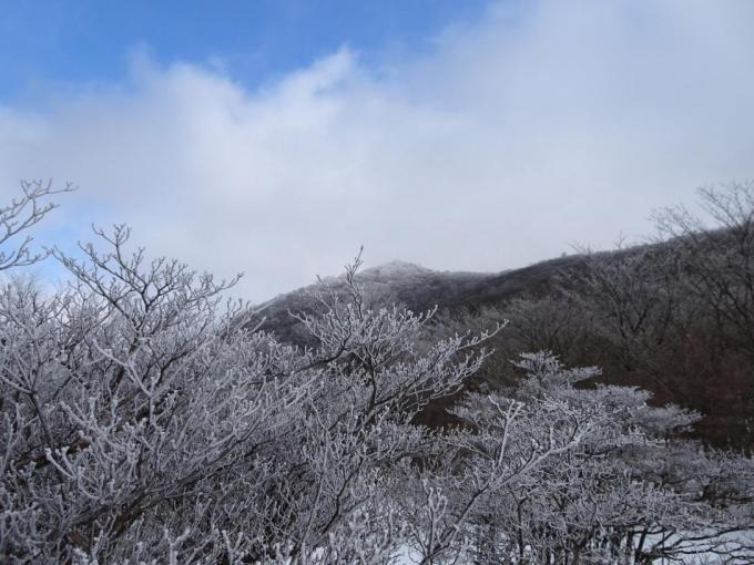 荒山高原も霧氷
