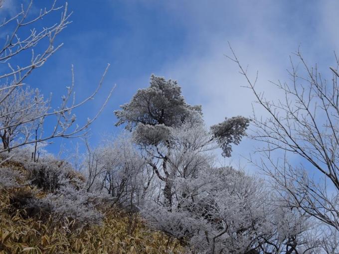 松の木も真っ白