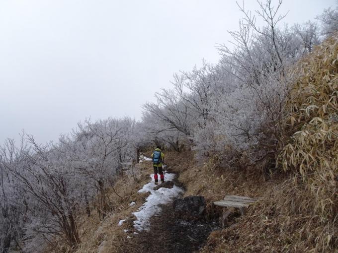 南面の道も霧氷