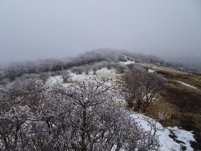 竈山から 雪はないけど霧氷