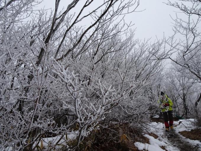 霧氷の道を歩いて