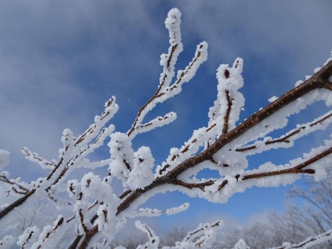 山頂の霧氷1