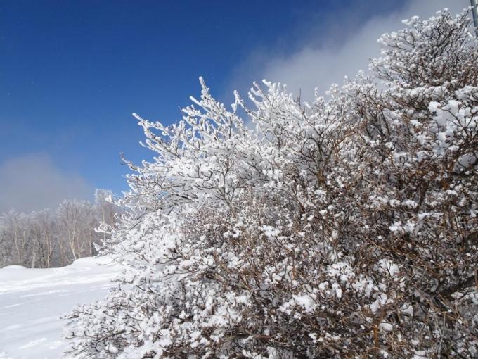 山頂の霧氷5