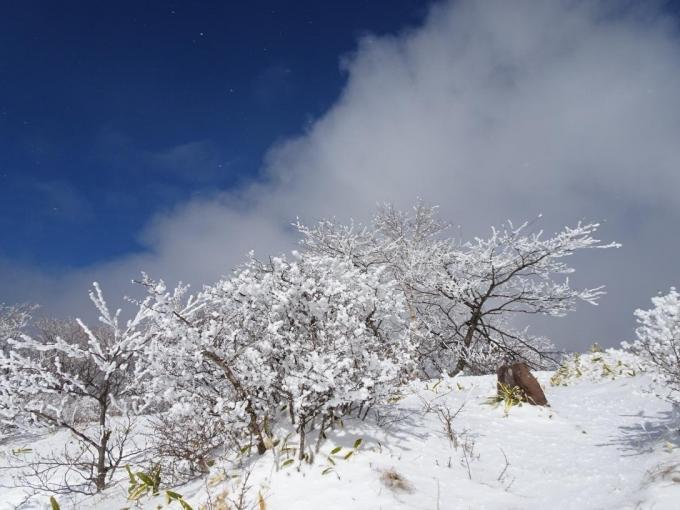山頂の霧氷6