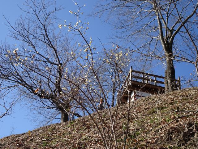 ロウバイと山頂展望台