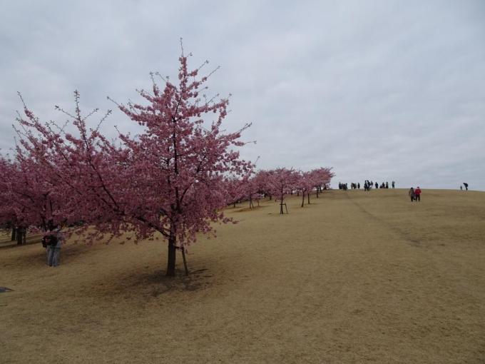 くさぶえの丘(市民の森公園)