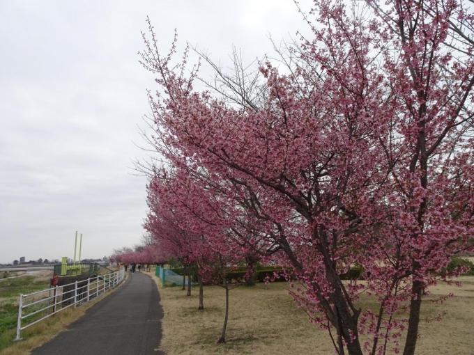 伊勢崎西部公園(北側)