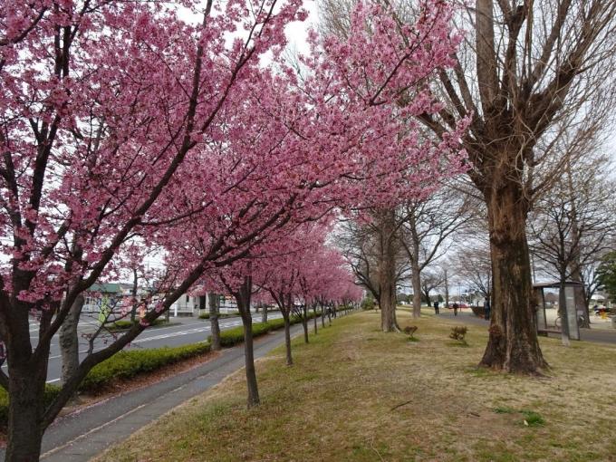 伊勢崎西部公園(南側)