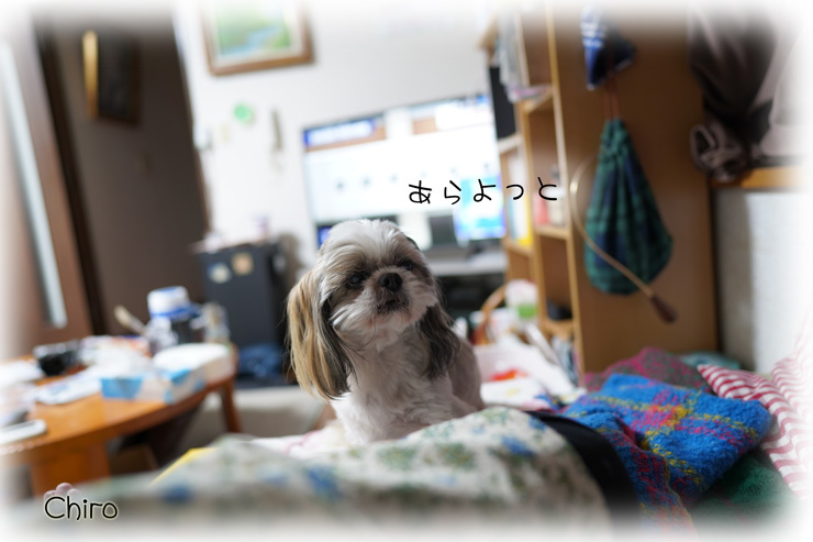 DSC00561.jpg