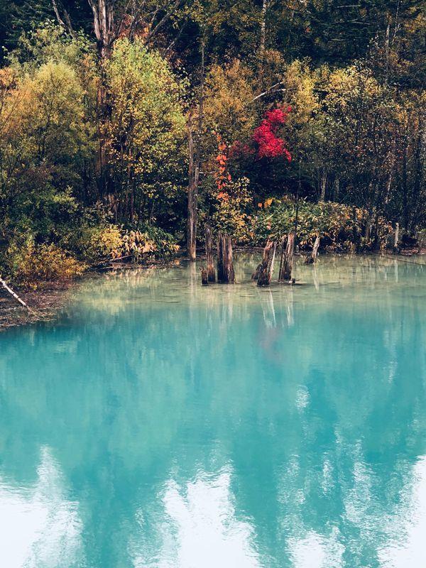 IMG_0716青い池3