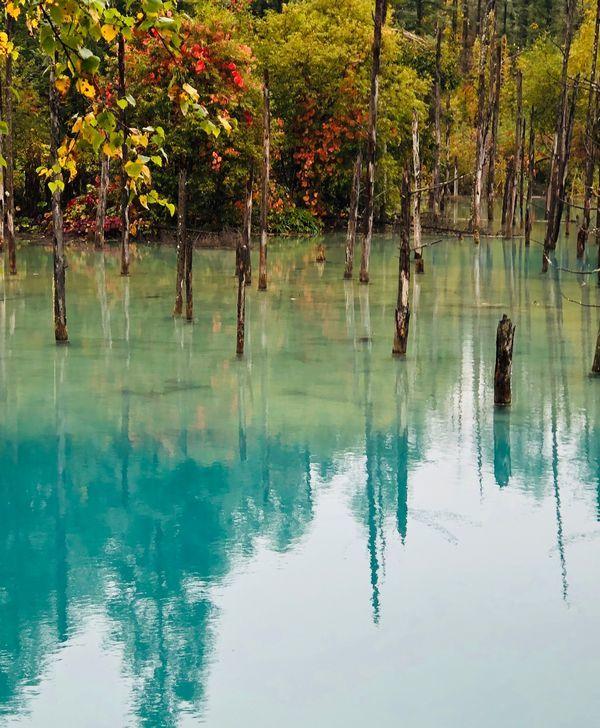 IMG_0719青い池4