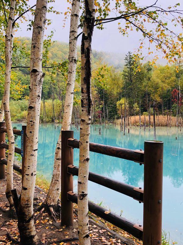 IMG_0720青い池5