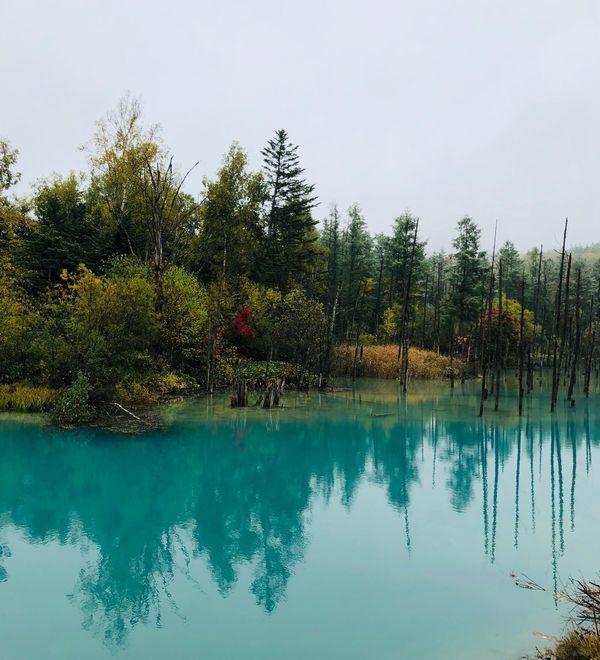 IMG_0715青い池2
